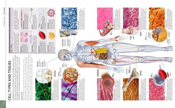 Human Body Types Of Cells