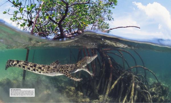 http://www.cashou.com/portfolio/ocean/136-137_Mangroves.jpg